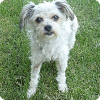 Adopt A Pet :: Lizzy - Los Angeles, CA