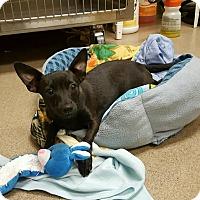 Adopt A Pet :: Dean Martin - beverly hills, CA