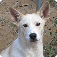 Adopt A Pet :: Jackson - Foster, RI
