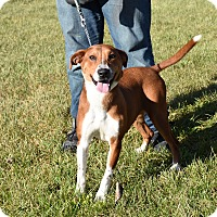 Adopt A Pet :: Ginger - North Judson, IN