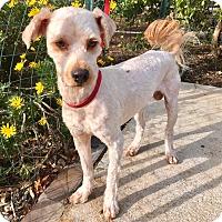 Adopt A Pet :: Stanley - Santa Ana, CA