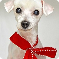 Adopt A Pet :: Merry - Dublin, CA
