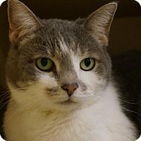 Adopt A Pet :: Jazzy - Salem, NH