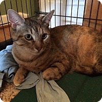 Adopt A Pet :: Maggie Mae - Newark, DE