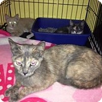Adopt A Pet :: Sheena - bloomfield, NJ