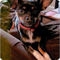 Adopt A Pet :: Blackie - Scottsdale, AZ