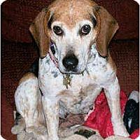 Adopt A Pet :: Pepper - Novi, MI