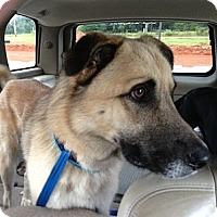 Adopt A Pet :: Klaus - Homewood, AL