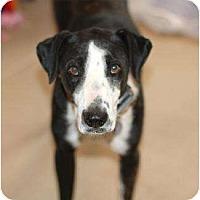 Adopt A Pet :: Patron - Scottsdale, AZ