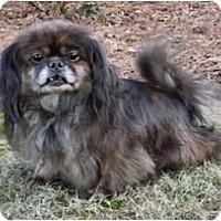 Adopt A Pet :: Katie - Mooy, AL