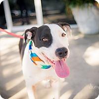 Adopt A Pet :: Libby - San Antonio, TX