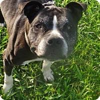 Adopt A Pet :: Rosie - Jupiter, FL