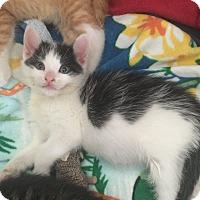 Adopt A Pet :: Odel - Island Park, NY