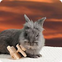Adopt A Pet :: Porter - Marietta, GA