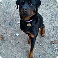Adopt A Pet :: Diamond - Cuddebackville, NY