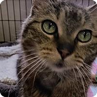 Adopt A Pet :: Suzy Q - Highland, IN