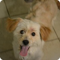 Adopt A Pet :: Rocky - Harrisburg, PA