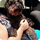 Adopt A Pet :: Freddie (Has application)