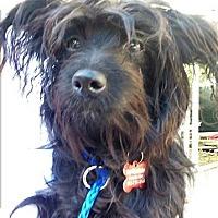 Adopt A Pet :: Nibbles - Encino, CA