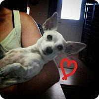 Adopt A Pet :: Bunee - Mesa, AZ