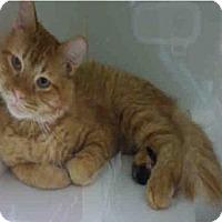 Adopt A Pet :: BLACKFOOT - Rockford, IL