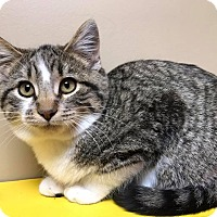 Adopt A Pet :: Dixie - Maryville, MO