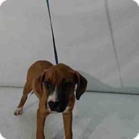 Adopt A Pet :: A364731 - Orlando, FL