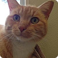 Adopt A Pet :: Flapjack - Georgetown, TX