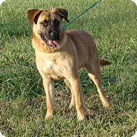 Adopt A Pet :: Neary - Cameron, MO