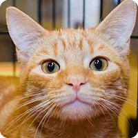 Adopt A Pet :: Julius - Irvine, CA