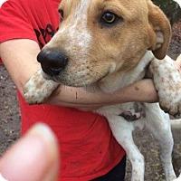 Adopt A Pet :: Jake meet me 1/20 - Manchester, CT