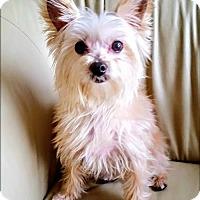 Adopt A Pet :: Jackson - Whiting, NJ