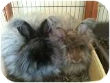 Angora, English Mix for adoption in Maple Shade, New Jersey - Zoey and Emily