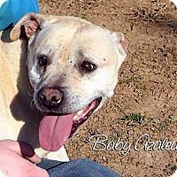 Adopt A Pet :: Baby A - Mechanicsburg, PA