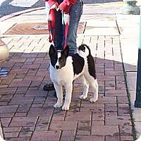 Adopt A Pet :: Rain - Chewelah, WA