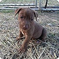 Adopt A Pet :: Zack - Linton, IN