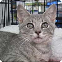 Adopt A Pet :: Summer - Port Republic, MD