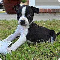Adopt A Pet :: *Splash! - PENDING - Westport, CT