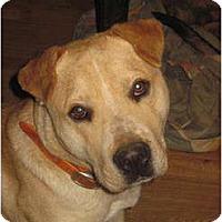 Adopt A Pet :: Quinton - Bakersville, NC