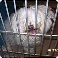 Adopt A Pet :: Handsome Harry - La Costa, CA