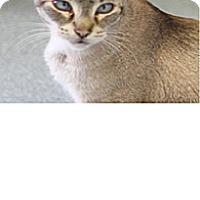 Adopt A Pet :: Teddy S. - El Cajon, CA