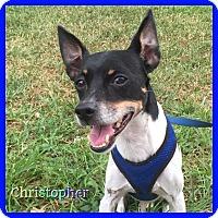 Adopt A Pet :: Christopher - Hollywood, FL