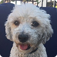 Adopt A Pet :: Ricky - La Costa, CA