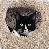 Adopt A Pet :: Chuck - St Louis, MO