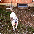 Adopt A Pet :: Aurora