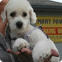 Adopt A Pet :: Sofia - Los Angeles, CA