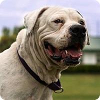 Adopt A Pet :: Sally II - Loxahatchee, FL