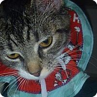 Adopt A Pet :: Sophie - Hamburg, NY