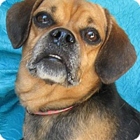 Adopt A Pet :: Taylor Wagner Hill - Cuba, NY
