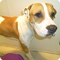 Adopt A Pet :: Petey (Courtesy Listing) - Scottsdale, AZ